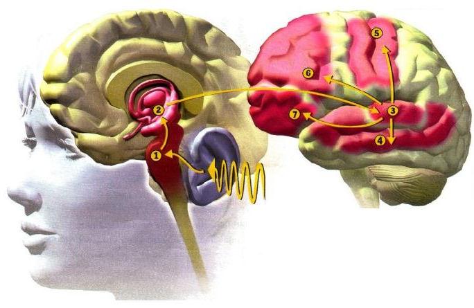 Alfred Tomatis entdeckte den Zusammenhang von Gehör, Gleichgewichtsinn und Gehirn.